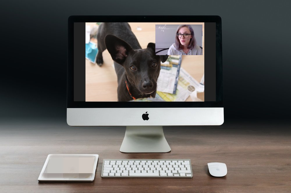 Video Chat Coaching and Consultations! - Working with your pet from the comfort of home has never been easier! All you need is a web-enabled smart phone, tablet or computer to participate!Initial Consultations ($69 - 60 min.) are the place to begin for any new client. During this chat session we collect a detailed history of health, behavior and training. Through the interview process we acquire insight and assess the pet's temperament while interacting with you. After the appointment you will receive a custom report detailing management strategies, next steps, and a fully customized training and behavior modification outline.After your training or behavior modification plan has been created we can move forward with continued coaching sessions to help you implement the exercises and strategies from start to finish. 30 min. Private Video Coaching ($49) sessions are a great way to get personalized instruction and coaching without the expensive costs!