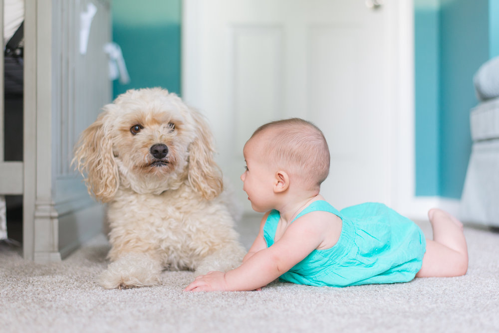"""This dog is displaying stress warnings, it is tense and leaning away from the baby, these behaviors could precede a more dangerous interaction. Learn more about reading dog body language and preventing the """"unexpected"""" with our preparing for Baby Training Program."""