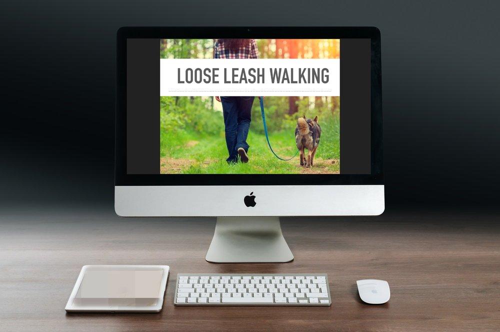 Loose Leash Walking Webinar Promo Pic.jpg