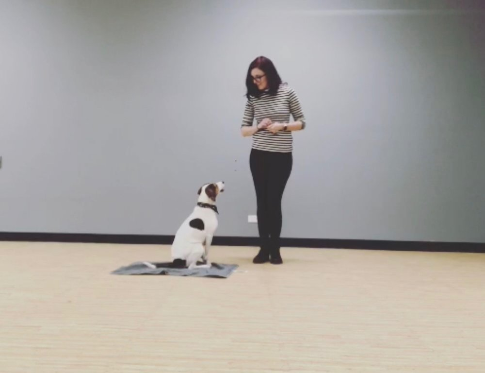 Sara Richter, CPDT-KA - Will be available at Pet People, 775 Waukegan Rd., Deerfield, IL 60015 from 2pm-4pm to answer questions or provide consultation regarding training and behavior services. Please feel free to drop by!