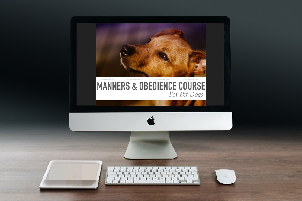Manners & Obedience Online Picture.jpg