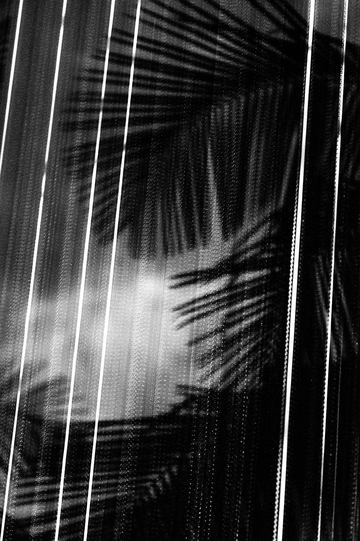unsettle-co-lifestyle-blog-snapshots-interview-photographer-asato-Iida-black-white-fern
