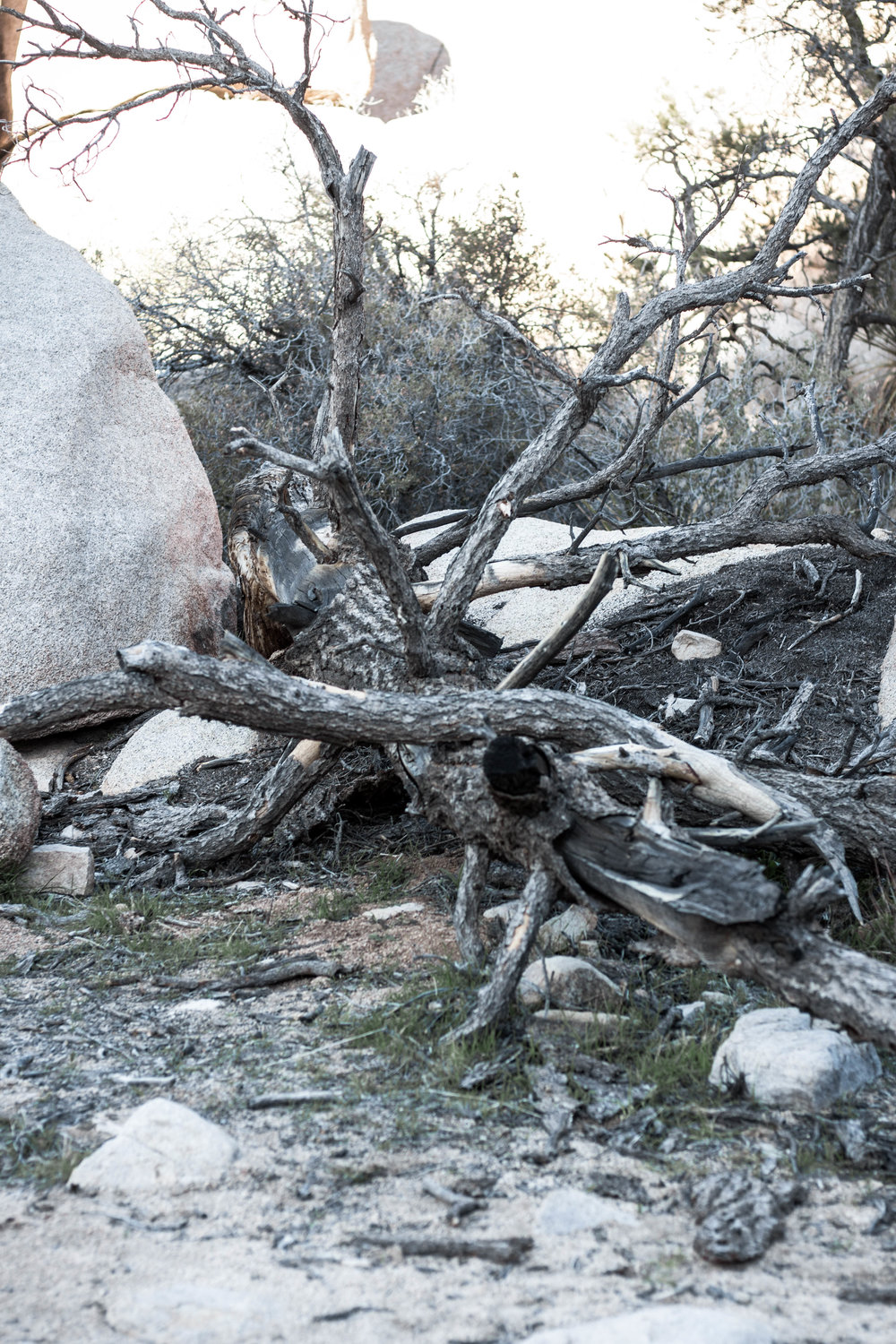 unsettle-co-lifestyle-blog-spaces-joshua-tree-national-park-trees