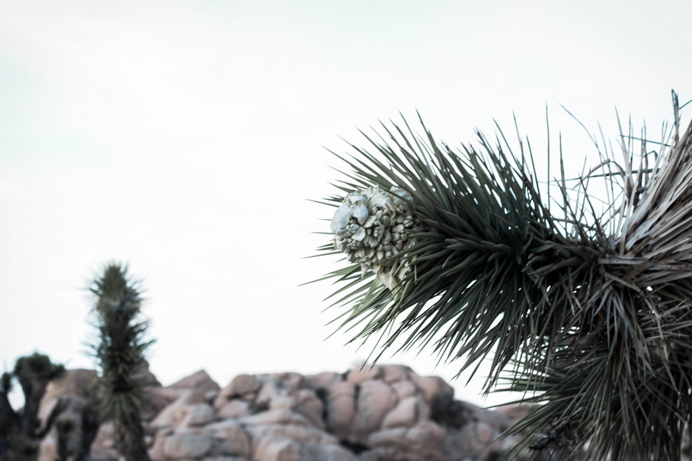 unsettle-co-lifestyle-blog-spaces-joshua-tree-national-park-joshua-tree-1