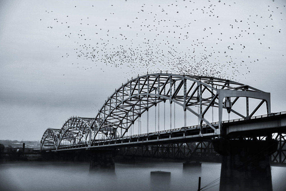 unsettle-snapshots-lifestyle-blog-chris-mullins-photography-birds-and-bridge