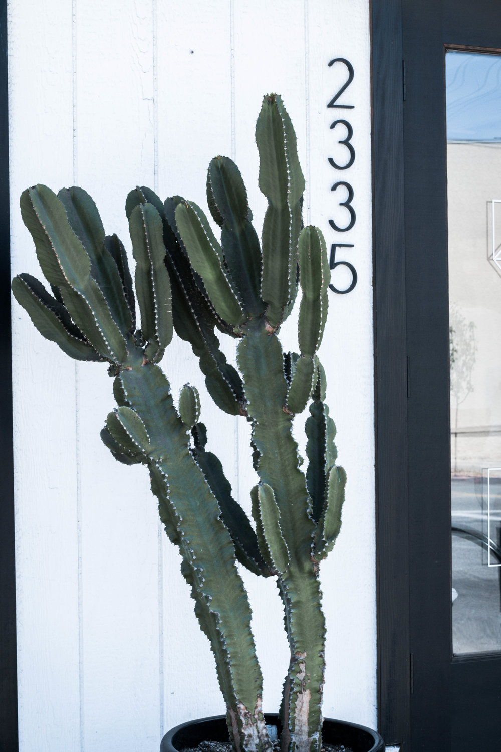 cactus planter at communal coffee in san diego