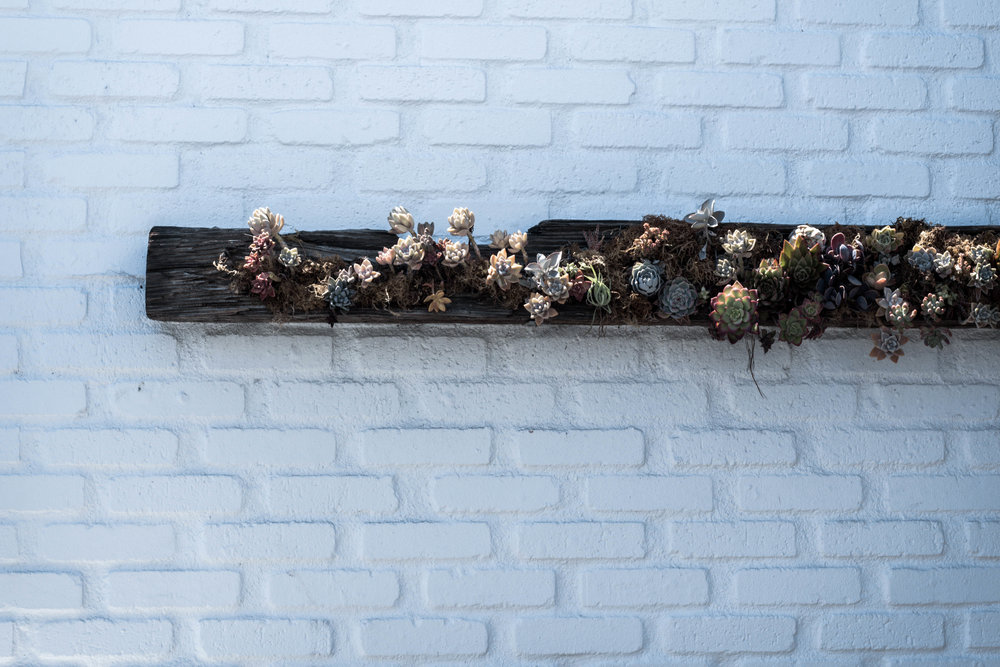 succulents hanging off the wall