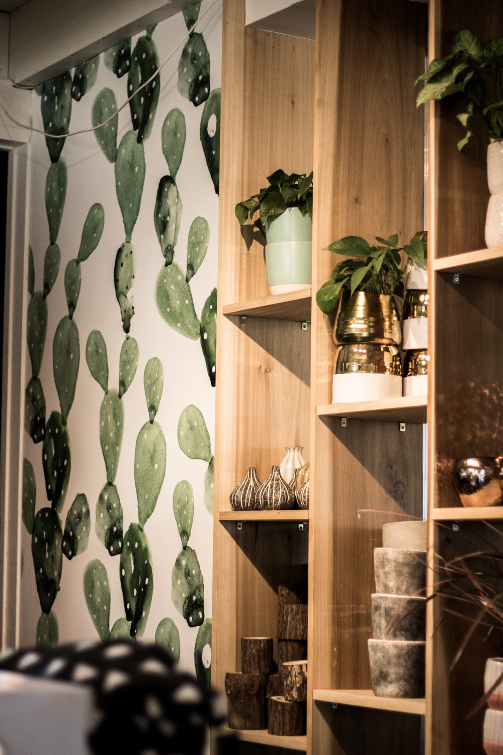 mural of cacti and succulents with shelves for planters