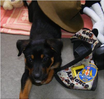 01. Ranger puppy.png