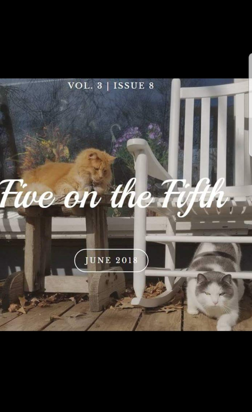 Porch Cats.jpg