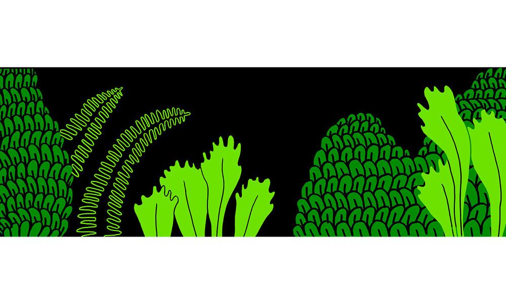 spl_plants_right2.jpg