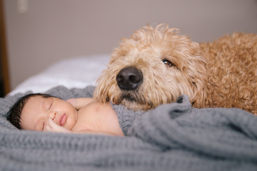 In-Home Lifestyle Newborn Shoot Dog and Baby
