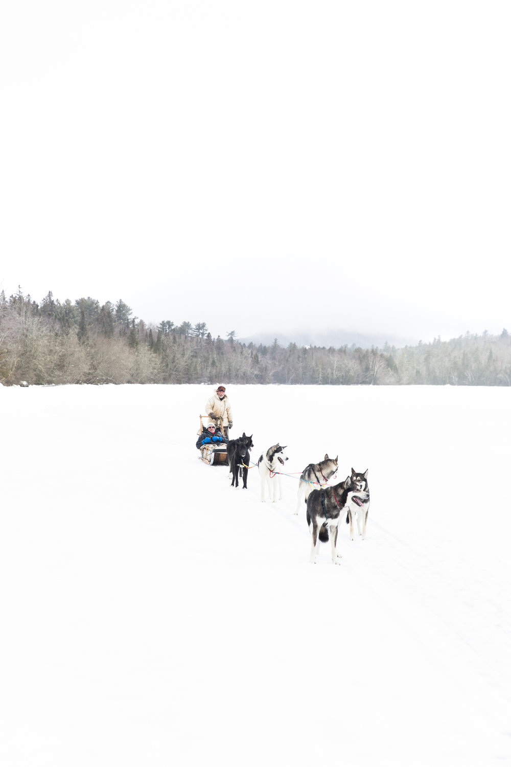 Dogsledding- Mahoosuc, Maine