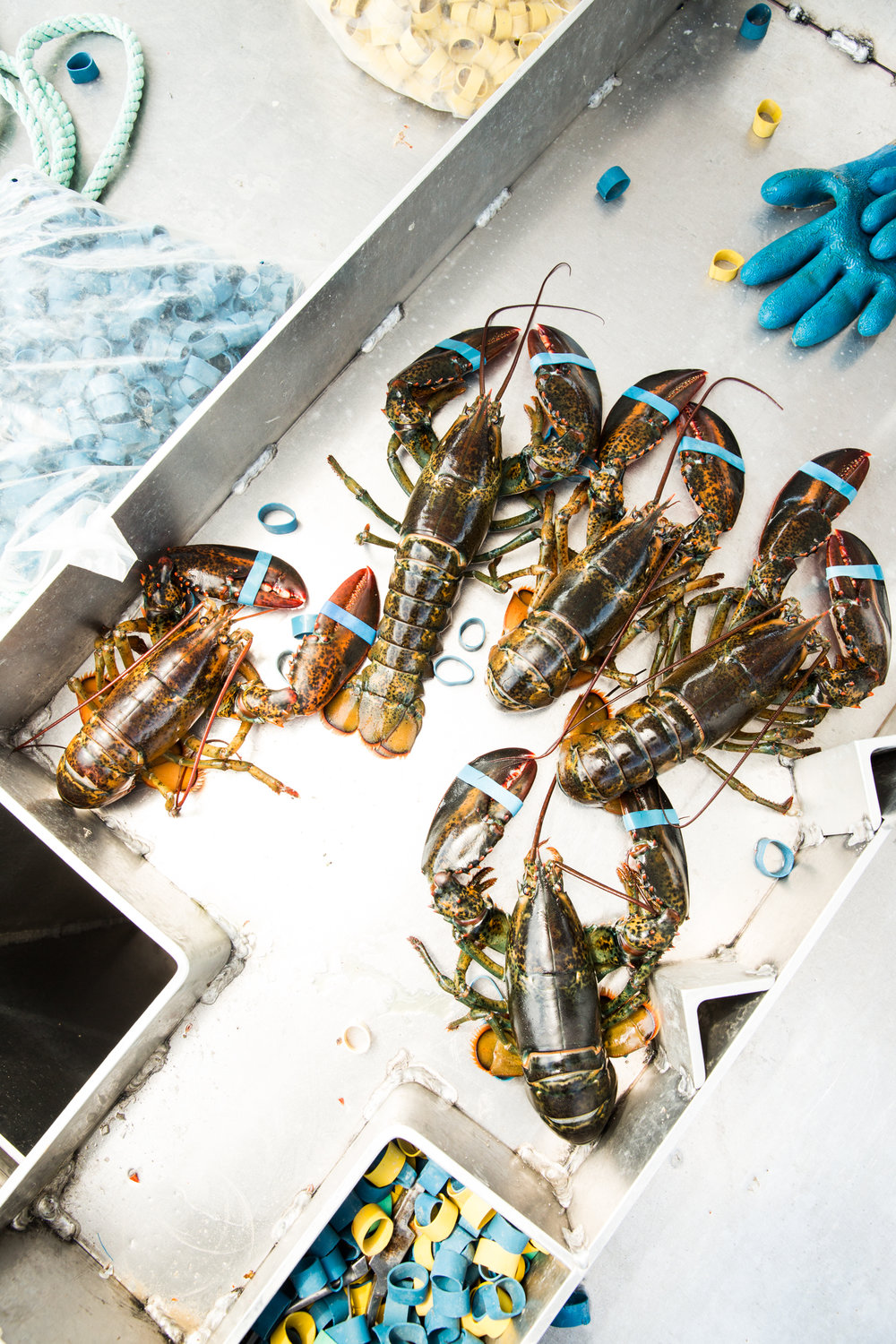 Lobster fishing, Maine.