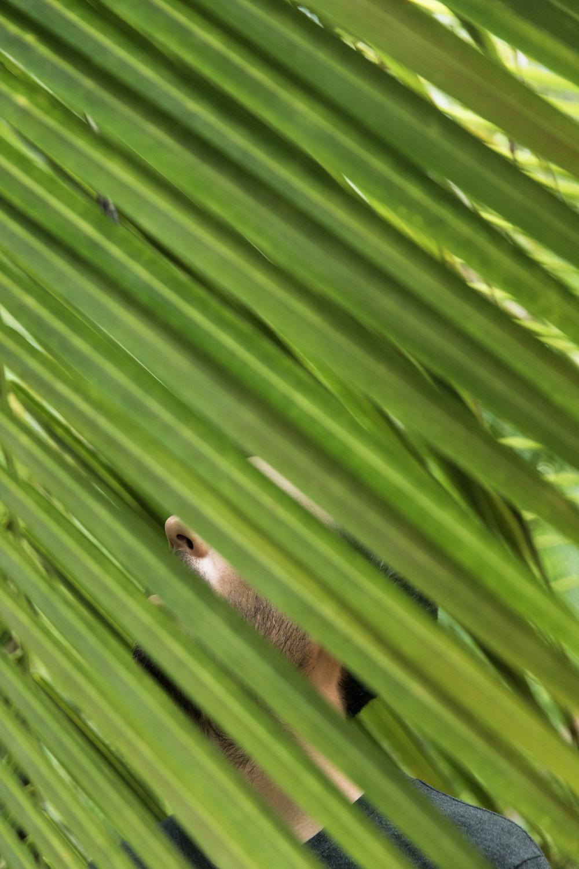 GRybus-Blog-Belize-6790.jpg