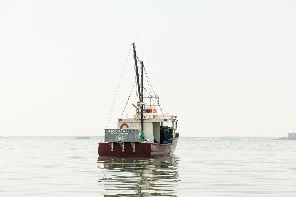 GRybus-Blog-Seaweed-0668.jpg