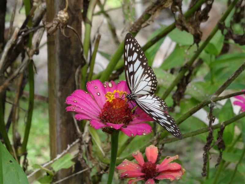 flower_00290_low.jpg