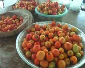 tomato.small.jpg
