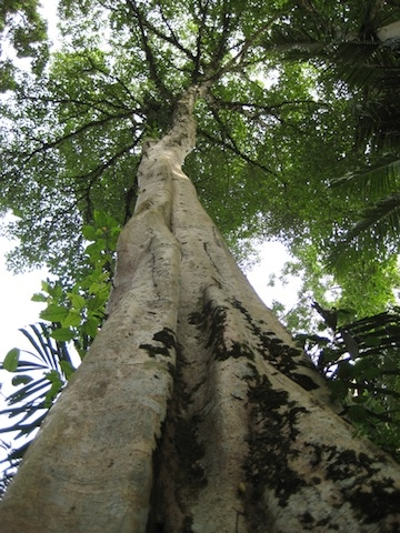 lb_place_tree.jpg