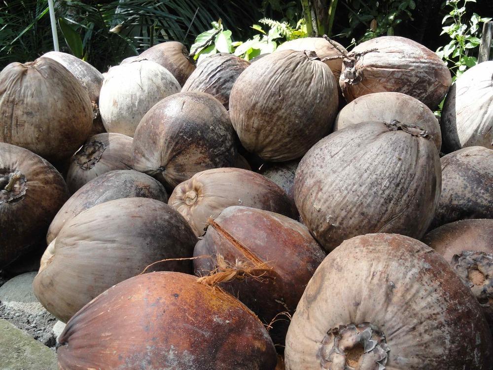 1_coconut