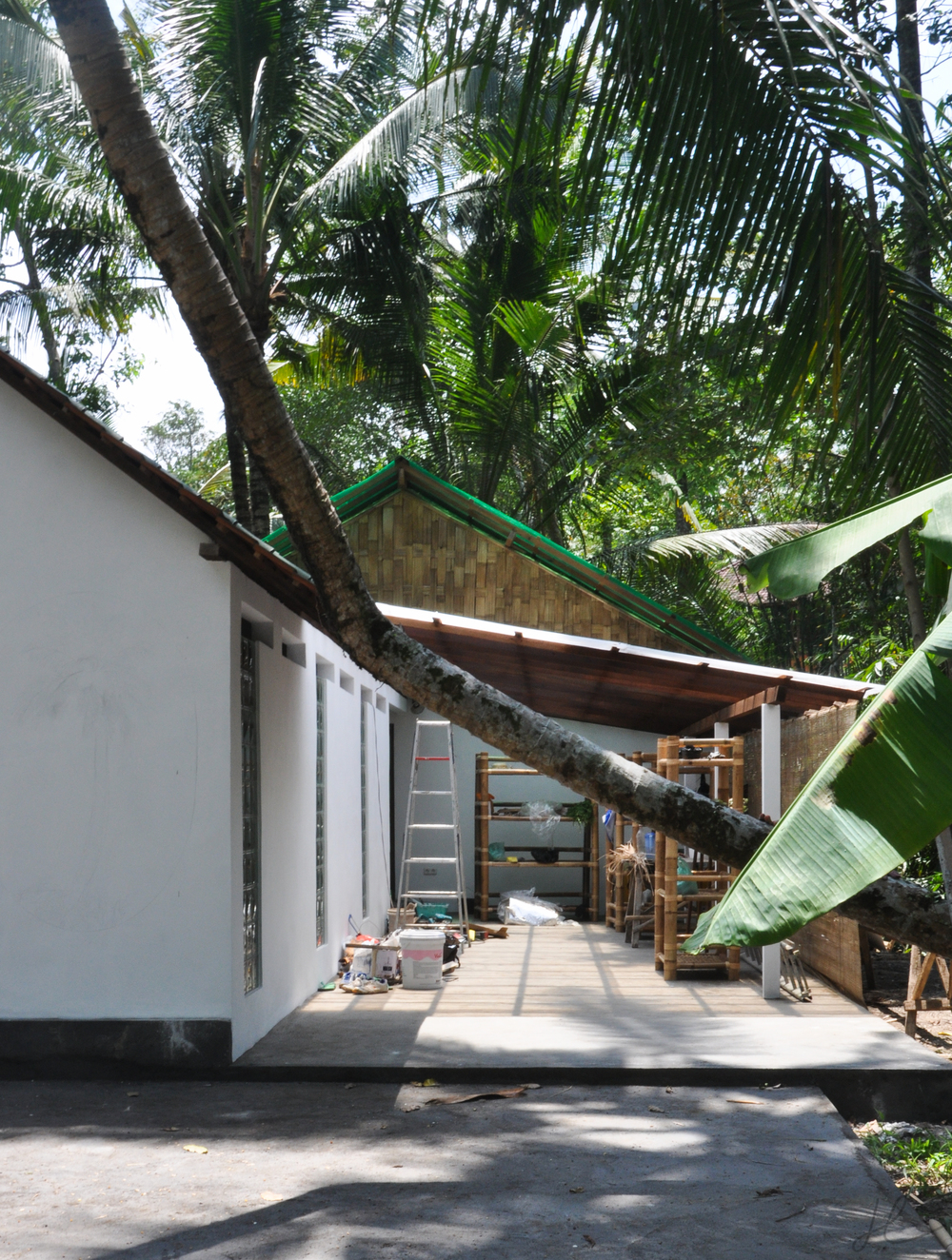 coconut house with tree