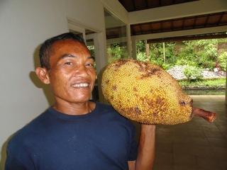 Ketut Jackfruit_1000px