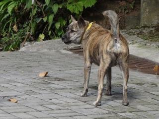 Dogs at Jiwa Damai
