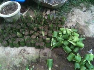 Plant nursery (1)