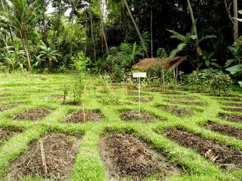 Permaculture Design Certification Course Jiwa Damai Bali