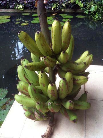 banana-01.jpg