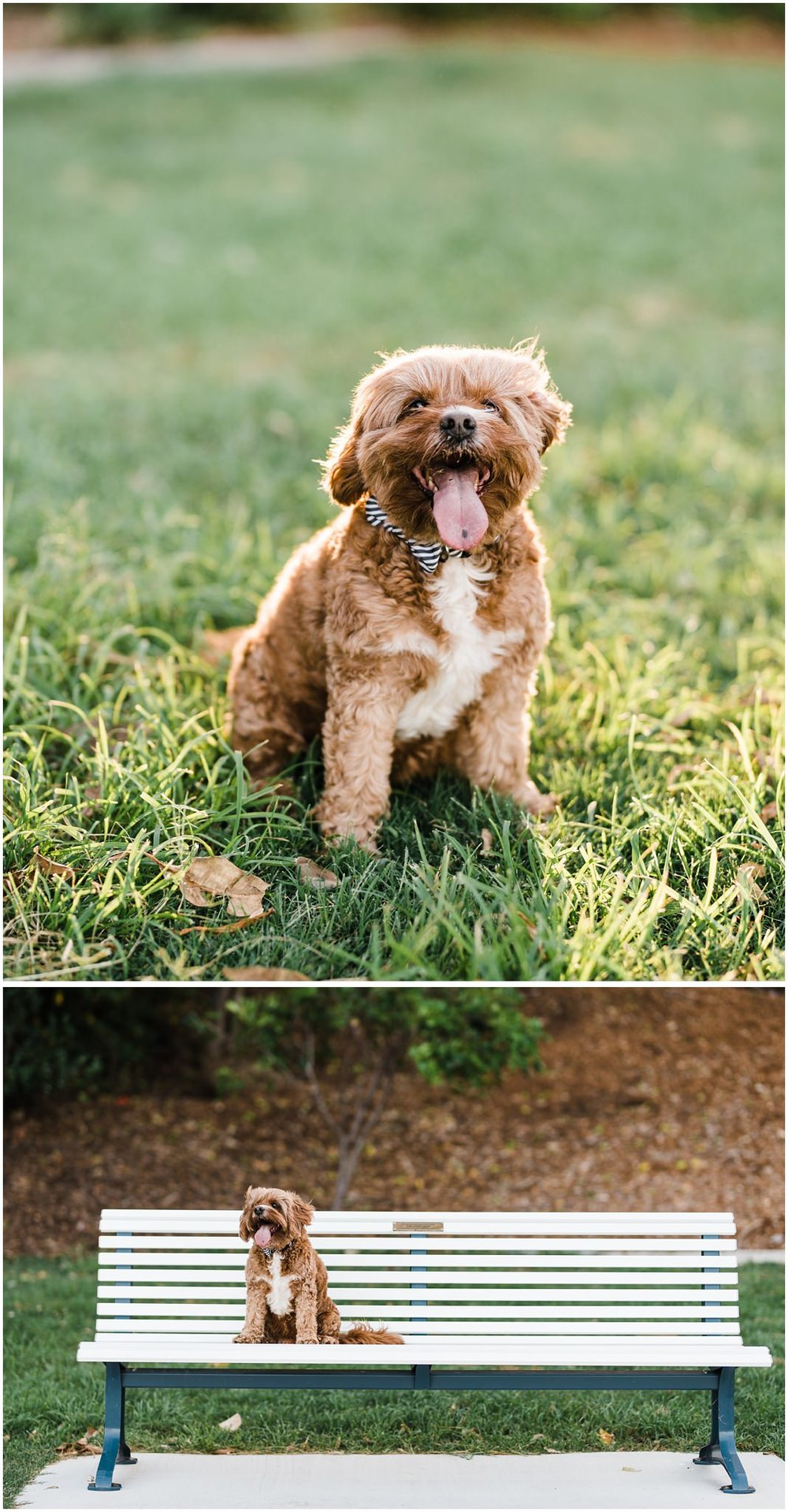 brisbane-brighton-sandgate-engagement-pet-photography-cute-doggo24.jpg