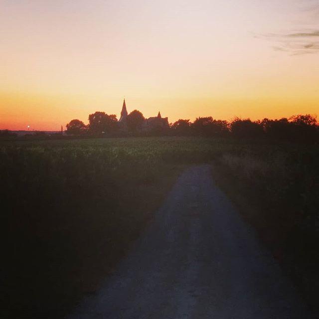 Couché de soleil sur les vignes #chateaudetarge #saumurchampigny