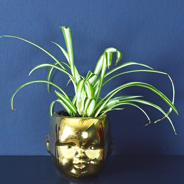 Baby's Head plant pot £9.95 From  Mia Fleur