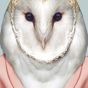Barn-Owl-Tyto-Alba-copia-300-x-300closeup_art-print.jpg