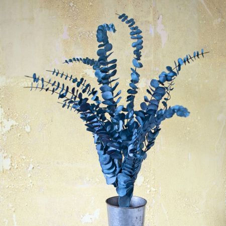 blue and gret cecropia.jpg
