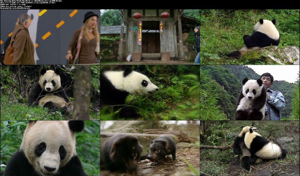sneezing-baby-panda 5 .jpg