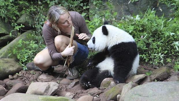 sneezing-baby-panda_.jpg