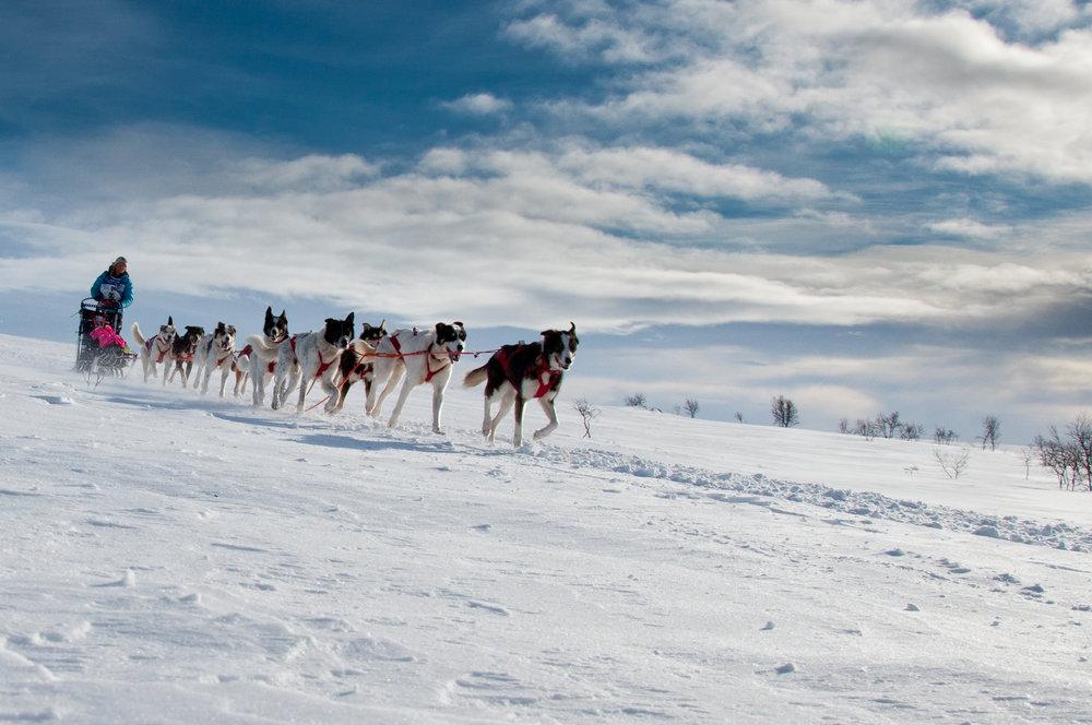 Foto: Geir Stian A Larsen /www.nordnorge.com