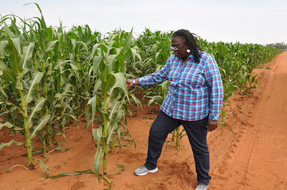 Dr. Gina Eubanks, with the LSU/SU AgCenters inspects corn at the Schoeman Boerdery (farm).