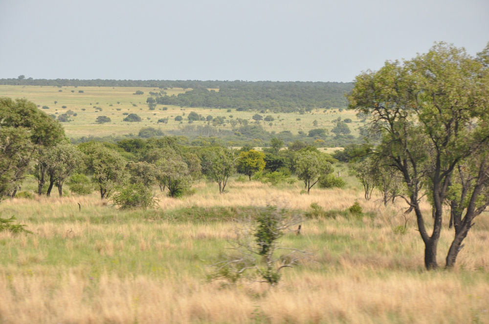 Example of the grasslands of the Witbank region of South Africa.