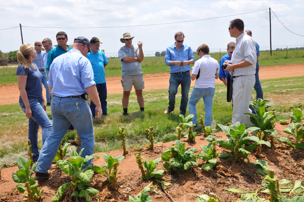 Peter and the class inspect hail damaged tobacco on the Terblanche Farms.