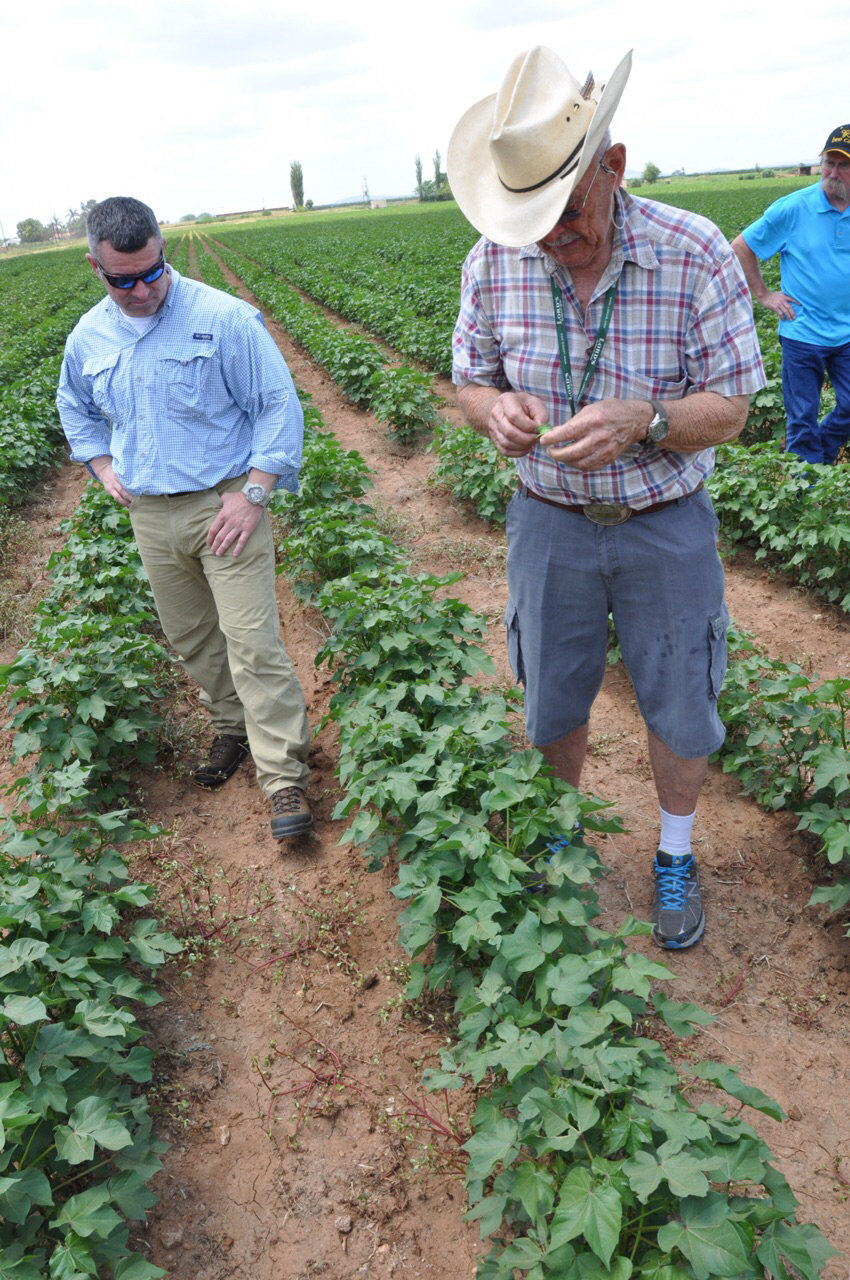 Trey Gingles and Percy inspect young cotton plants at Terblache Farms.
