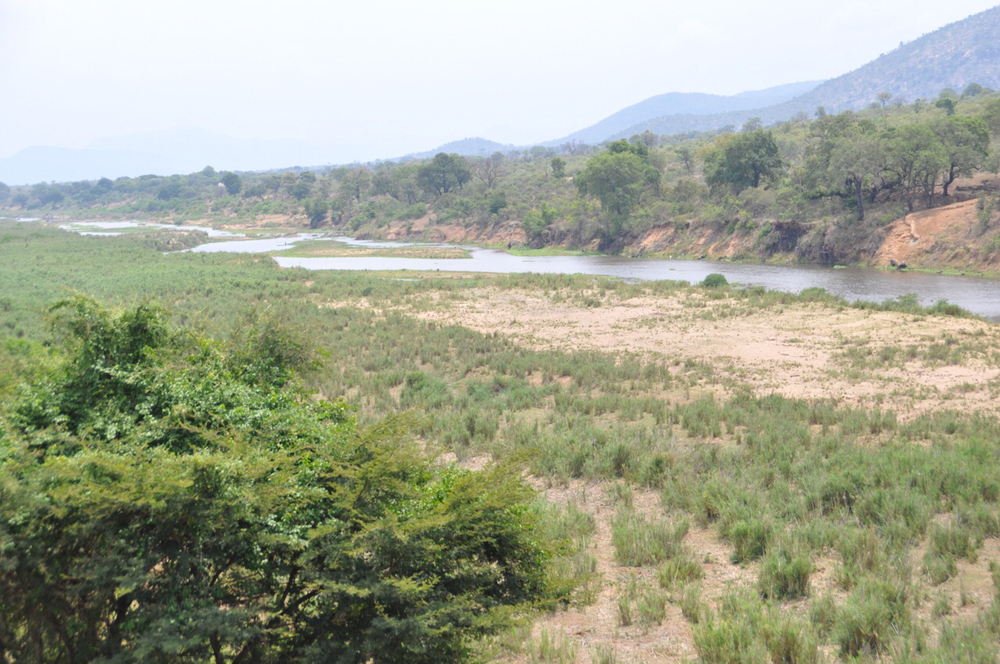 Vista of Crocodile River. Drought has caused the river to be at its lowest level in decades. If there would have been normal rainfall, the river would be up to the bushes in the left foreground.