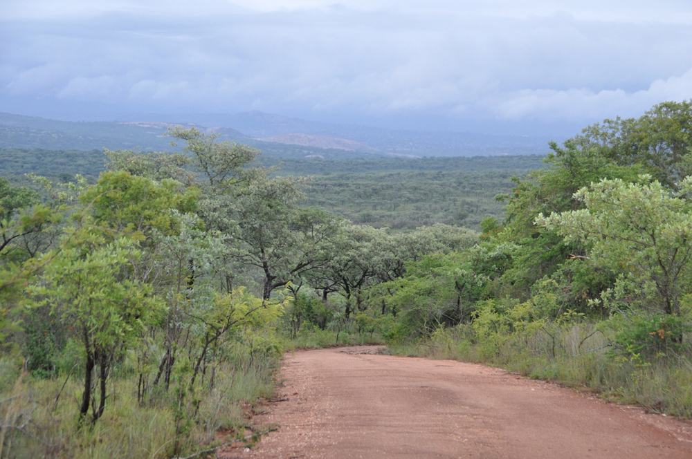 Another of dozens of scenic views at Kruger National Park.
