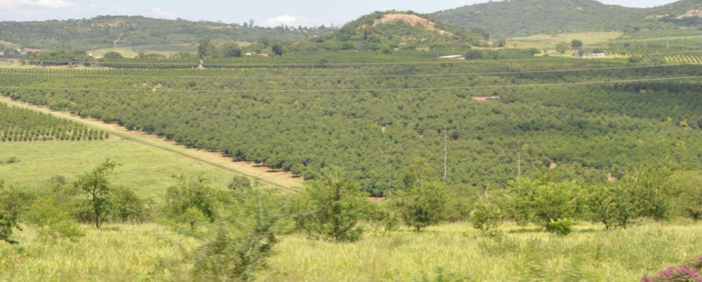 Macadamia nut orchard just outside of Sabie, South Africa.