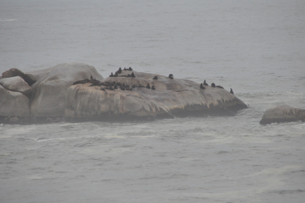 Seals on a rock in Hout Bay on the peninsula of Cape Town.
