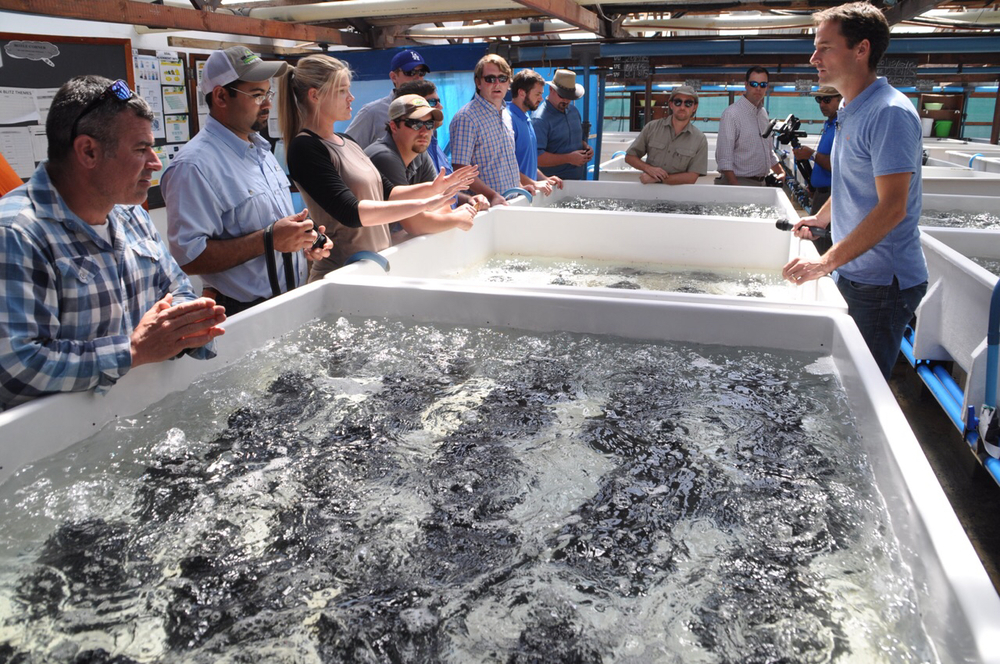 "Class XIV listens to Heart of Abalone Tour owner Johan Hugo explain the ""spat"" stage of abalone farming."