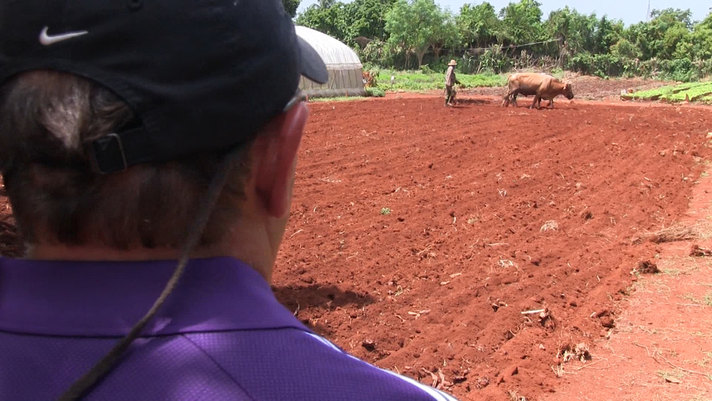 Louisiana sugarcane farmer Mike Melancon watches Cuba's version of modern agriculture, as oxen till the soil on a 25 acre sugarcane and vegetable farm.