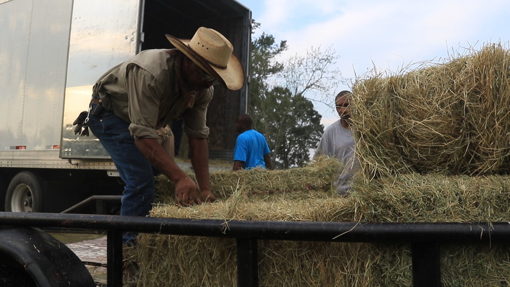 Louisiana Farm Bureau's Hay Clearinghouse provided over 2000 square bales to livestock owners affected by flooding.