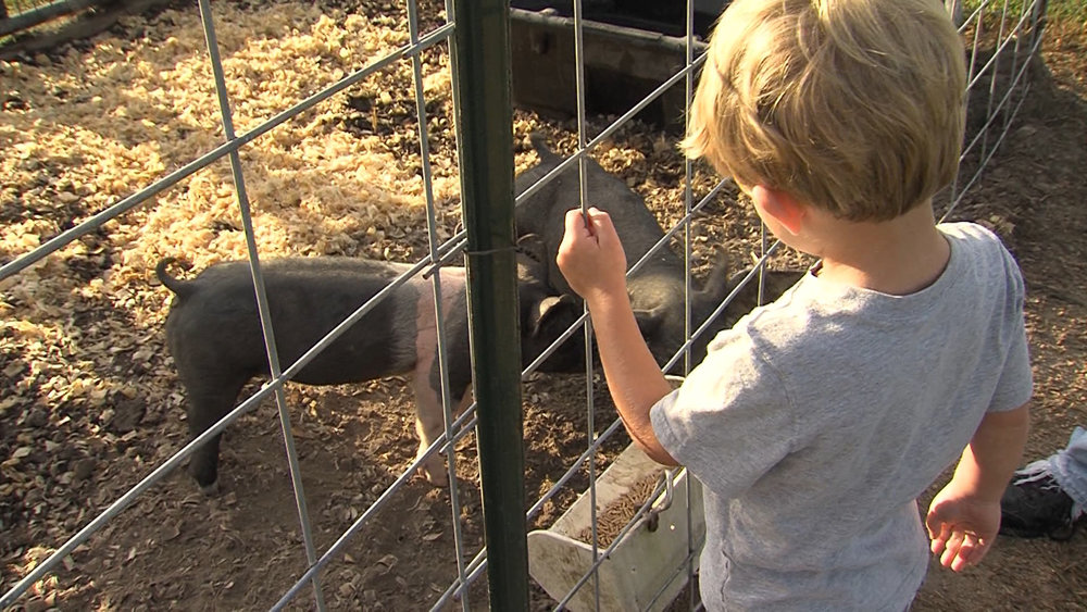Luke Davidson stands attentive at the pig pen at the Fast Food Farm.